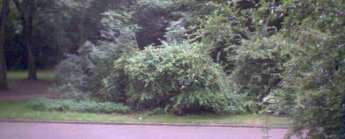 Bild der WebCam